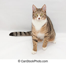 Tabby cat with yellow eyes sitting with a wary views of...