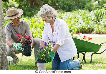 Couple engaged in gardening - Smiling mature couple engaged...