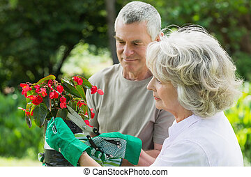 Mature couple engaged in gardening - Side view of a mature...