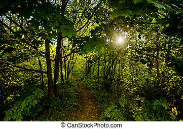 Path in the Woods - A path through a wooded area with sun...