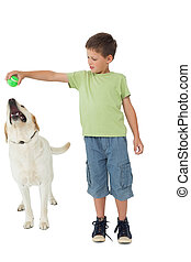 Cute little boy playing ball with his labrador on white...