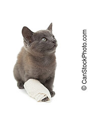 Cute grey kitten with a bandage on its paw on white...