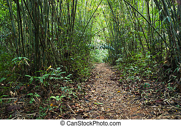 trail in the bamboo thickets tropical jungles of South East...