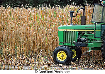 green tractor in cornfield - Farm tractor in corn field.