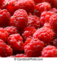 raspberry background - red raspberry background macro close...