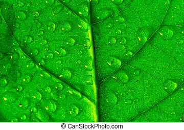 waterdrops on green plant leaf macro