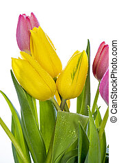 Easter flowers with water droplets on them - Beautiful...
