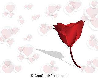 Red rose on  valentine background
