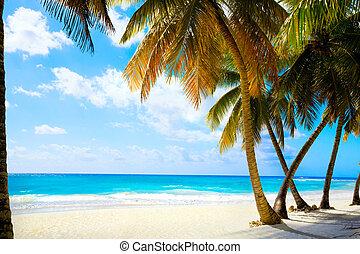 美しい, 心を動かされない, 芸術, トロピカル, 海, 浜