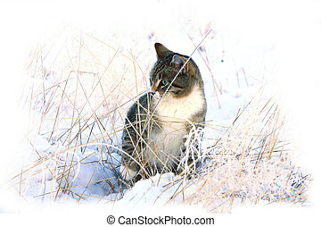 Winter, snow cat - Striped grey cat playing on snow Winter...