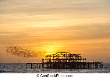 Flock of starlings over the west pier in Brighton - Flock of...