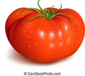 Red ripe tomato with waterdrops. vector illustration.