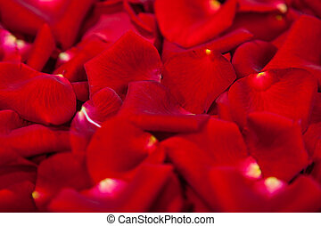 Background of red rose petals
