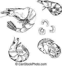Seafood. Shrimps. Hand drawn illustration.