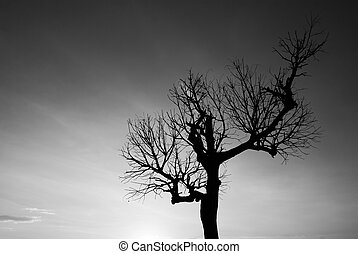 Single bare tree in black and white