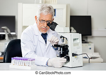 Researcher Examining Microscope Slide In Lab - Senior male...
