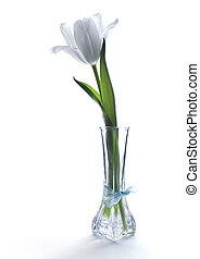 Single Tulip - One white tulip in a vase