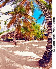 tropical beach in Dominican republic Caribbean sea Saona...