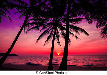 palm trees silhouette on sunset tropical beach Tropical...