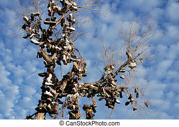 Tree covered with tennis shoes. - Leafless tree covered with...