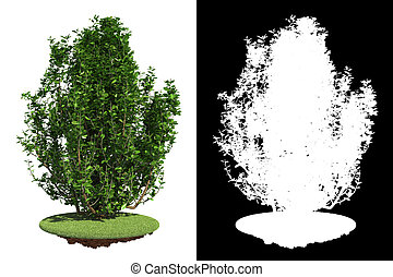 Green Shrub with Detail Raster Mask. - Green Shrub on Grass...