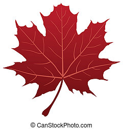 Maple Leaf - vector red maple leaf