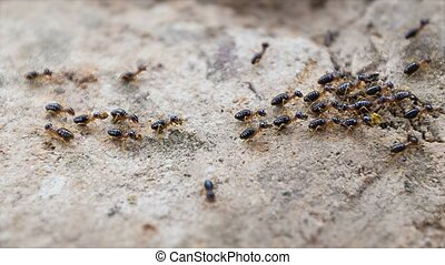 Termites working in a team