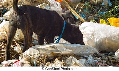 Stray dog looking for food in the dump