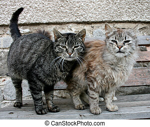 two cats are standing on the bench