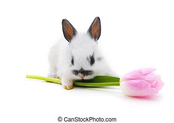 pequeno, coelho, flor