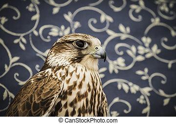 peregrine, falcon, medieval bird, wildlife concept