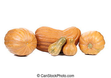 orange pumpkins isolated on a white background