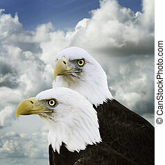American Bald Eagles Against A Sky