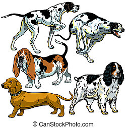 set with hunting dogs,difference breeds,images isolated on...