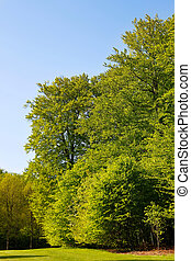 Large trees with green leaves