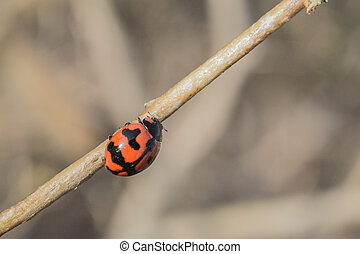 Lady Bug - This lady bug is playing hide and seek with me...