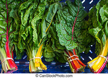 Multi-colored rainbow chard at local farm market