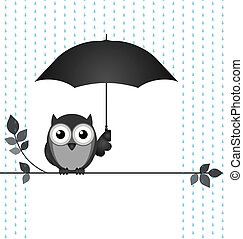 Raining - Owl sheltering from the rain sat on a branch...