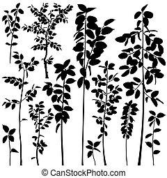Tree saplings - Set of editable vector silhouettes of...