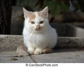 Cute kitten - Portrait of cute kitten sat on pavement or...