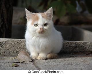 Cute kitten - Portrait of cute kitten sat on pavement or...