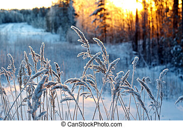 Winter scene Frozenned flower pine forest and sunset