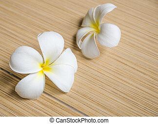 White plumeria on tiles floor
