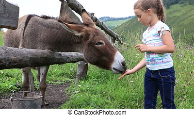 Little girl feeding a donkey.