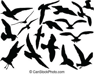 seagull collection - vector - illustration of seagull...