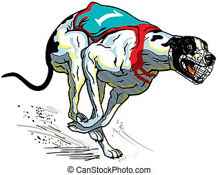 racing dog greyhound - running racing dog, english greyhound...