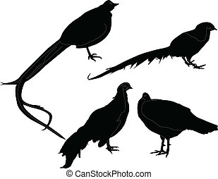 pheasant collection - vector - illustration of pheasant...