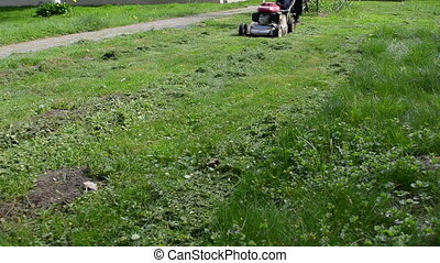 man cut grass - man gardener worker cut lawn with grass...