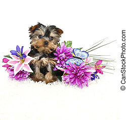 Sweet Yorkie Puppy - Very cute Yorkie puppy sitting with...