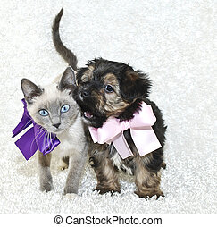 Funny Puppy and Kitten - Silly puppy that looks like he is...